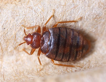 Short Pump, VA Bed Bug Control