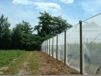 overhead bird netting