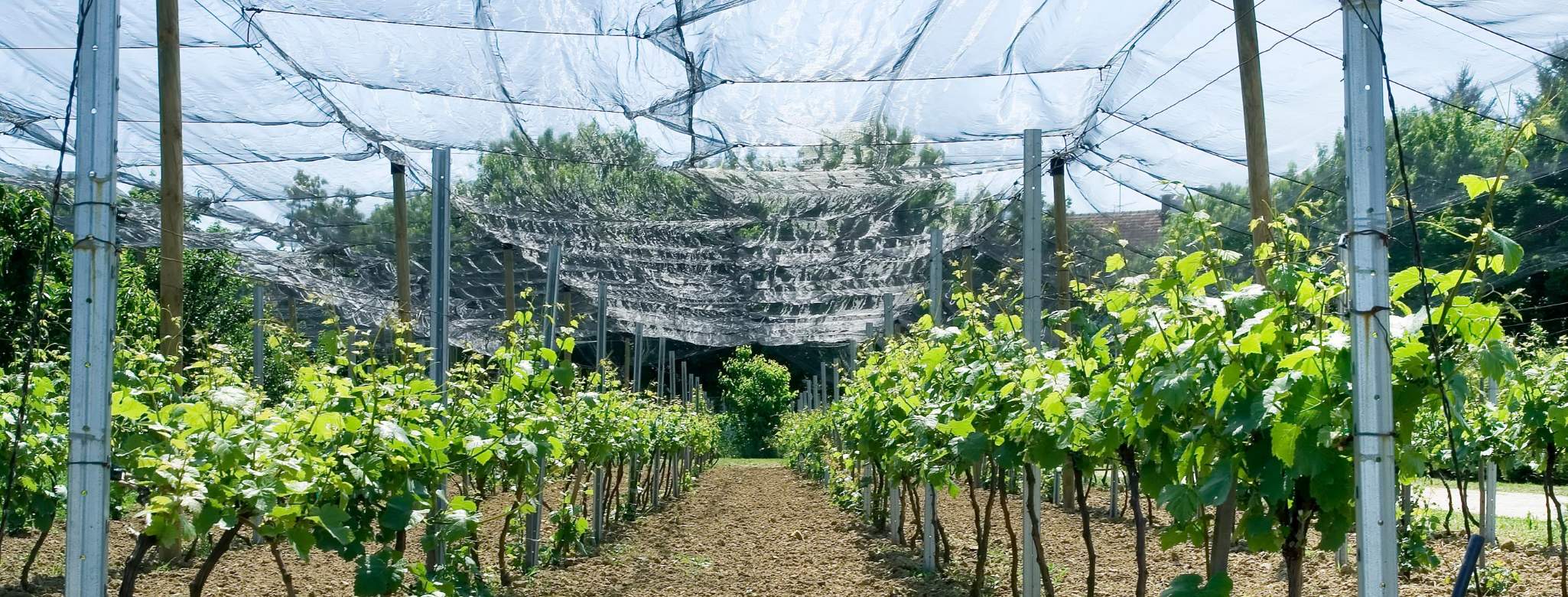 bird netting installed for vineyards