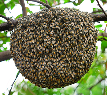 Wasp Nest Removal Atlanta